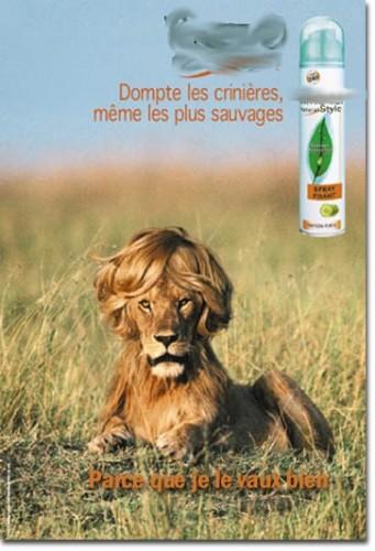 crainte lion.jpg