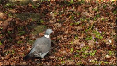 DSCF0454 marre d etre un pigeon.JPG