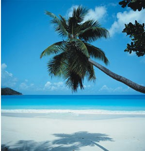 plage cocotier.jpg