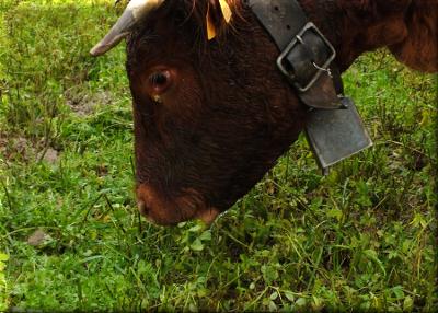S0010815ce n est qu une vache.png