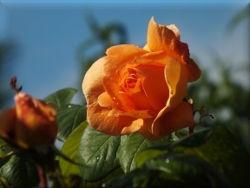 DSCF3599 anne rose calas.JPG