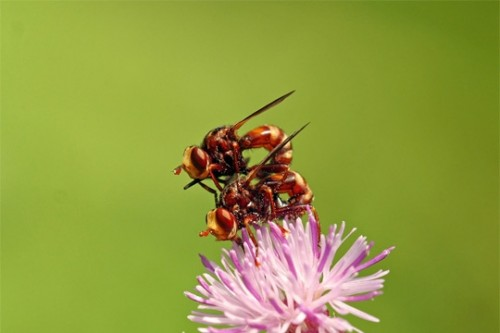 craccrac abeilles.jpg
