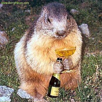 marmotte-avec champagne.jpg