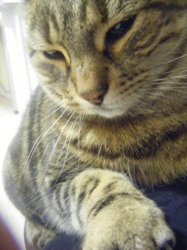 chat gros.jpg