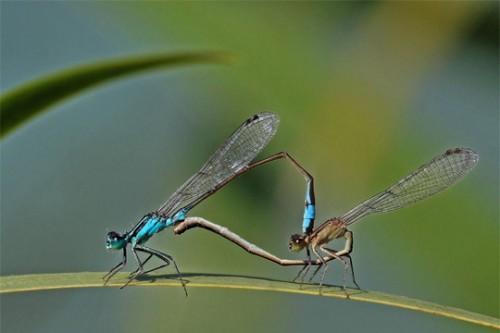 craccrac libellules.jpg